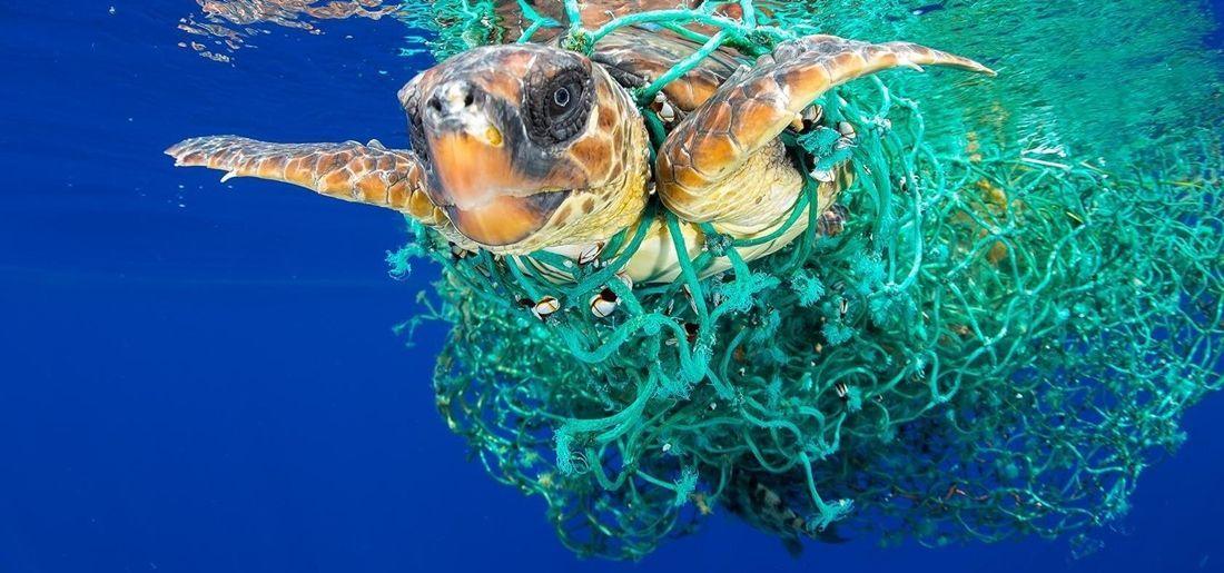 marine wildlife exploitation