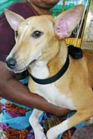 Thane street dogs Thane street dogs fly to Canada Thane dogs fly to Canada Thane dogs get adopted
