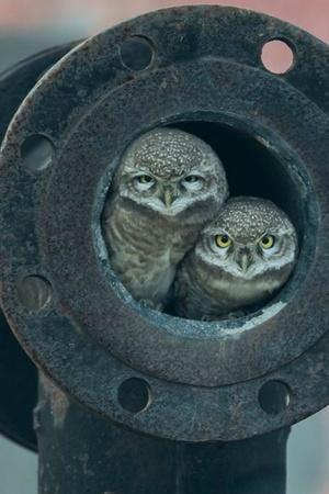 Wildlife Photographer Award