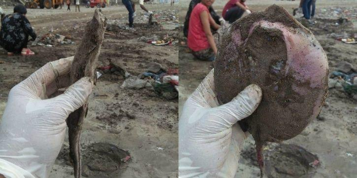 Ganesh chaturthi, immersion, dead turtle, fish, water snakes, Beach warriors, Juhu, Dadar beach