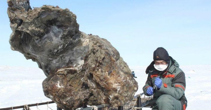 siberian time image of permafrost extinct animal remains