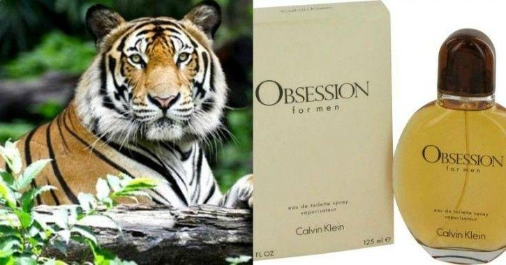Calvin Klein Perfume Obsession For Men Will Help Save A Tigress