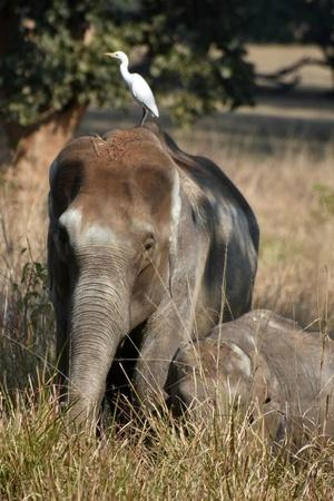 Elephant defecating open fields farmer lavatories forest officials West Bengal