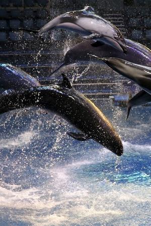 Whale in danger