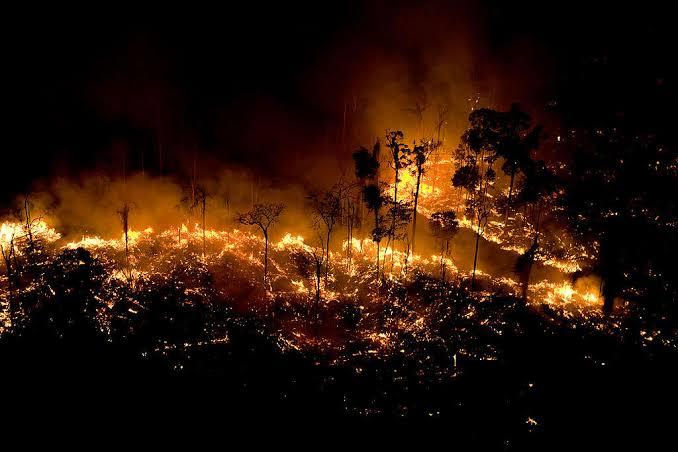 Amazon fires