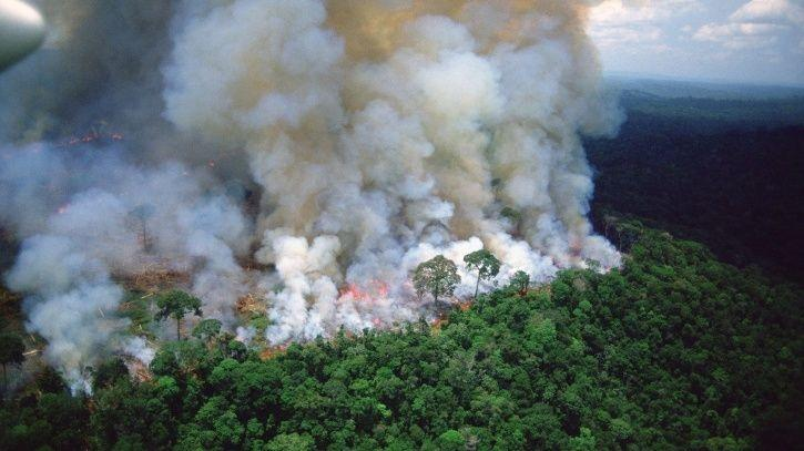 Amazon rainforest fire: Leonardo DiCaprios, Anushka Sharma and other celebs comment.