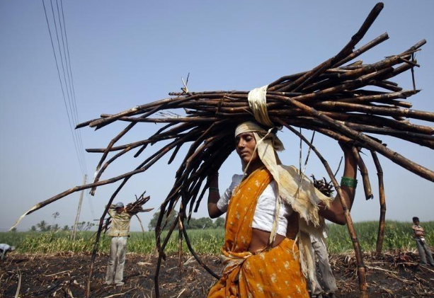 Cane Cutting Women In Beed, Womb-Less Women In Maharshtra Village, Cane Cutting Contractors, Hystere