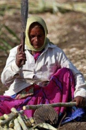 Cane Cutting Women In Beed WombLess Women In Maharshtra Village Cane Cutting Contractors Hystere