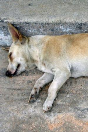 Dog mumbai