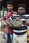 Gujarat Gujarat Floods Gujarat Crocodile Crocodile Rescue Karnataka Crocodile