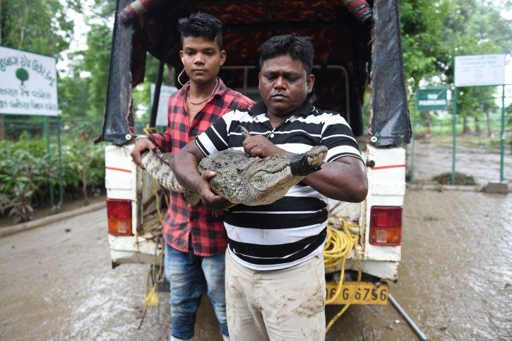 Gujarat, Gujarat Floods, Gujarat Crocodile, Crocodile Rescue, Karnataka Crocodile