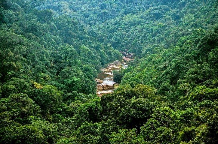 India's Lowest Forest Cover Is In Haryana, UT Lakshwadeep Has Largest Green Cover