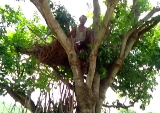 Odisha Tree House,