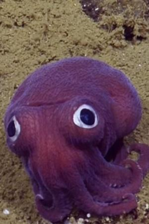 purple squid