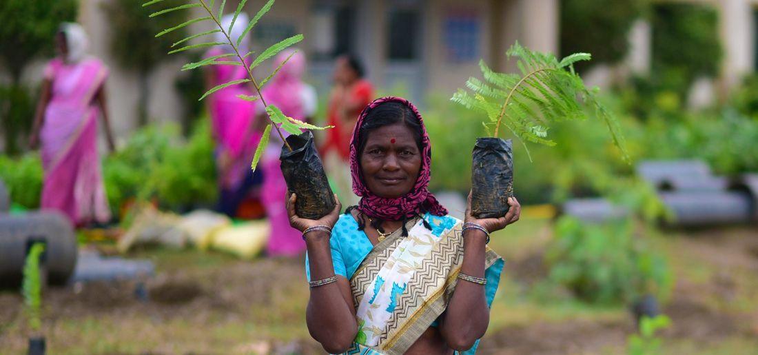 uttar pradesh tree planting