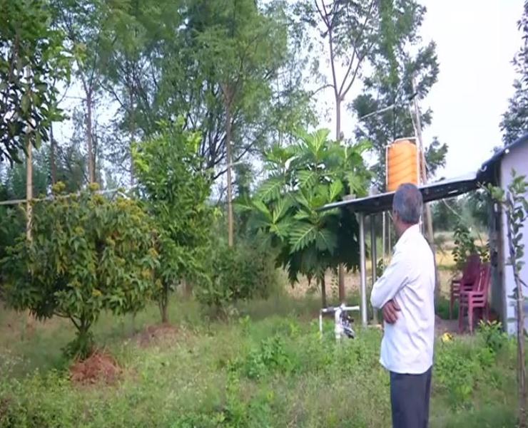 mini forest bengaluru karnataka