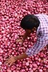 onion prices