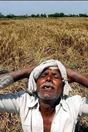 air quality damaged crops