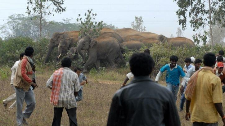 Human-Elephant Conflicts