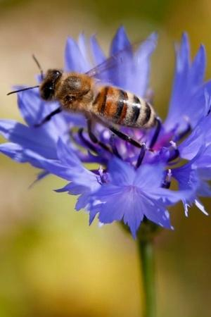 insect population is disappearing earth six mass extinction event human activity