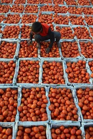 mp tomato farmers not exporting produce to pakistan