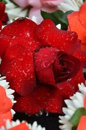 Valentines Day mercury rose farmers winter season Tamil Nadu export Pune