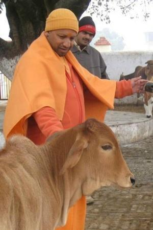 Yogi Adityanaths UP Govt To Spend Rs 647 Crore On Gau Mata People Call It Cow Budget