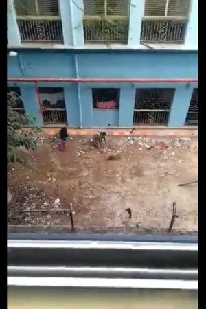 16 puppies Kolkata N R S Medical College video clip CCTV Footage