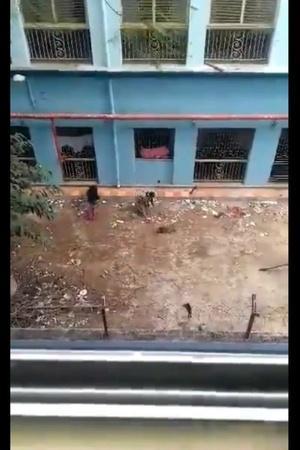 16 puppies Kolkata N R S Medical College video clip CCTV Footage
