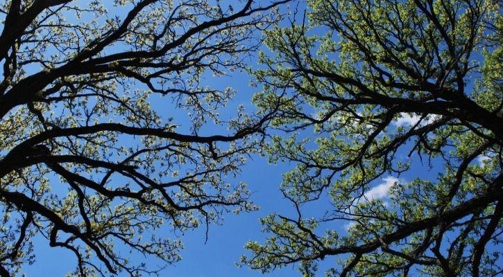 resolution trees