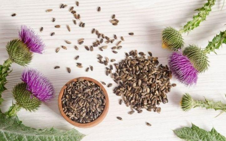 The Most Powerful Herbs That Can Improve Your Digestion