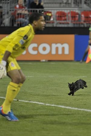 20 Photos Which Perfectly Depict When Animals Interrupt Sports