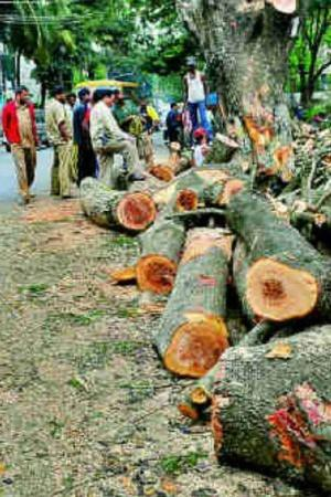 Close To 3500 Trees To Be Axed To Make Way For EightLane DelhiPanipat Highway