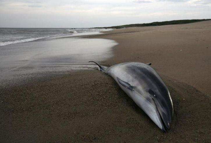 dolphins endangered sea plasti