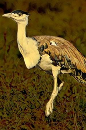 Govt Initiates Project To Save Critically Endangered The Great Indian Bustard Only 130 Remaining