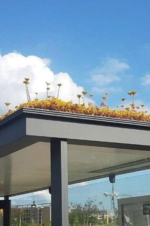 Green roof tops of bus stops