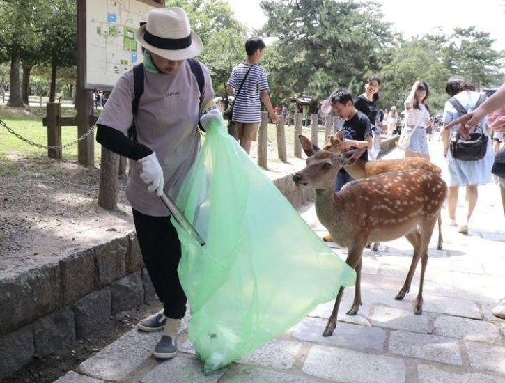 Japan deer die