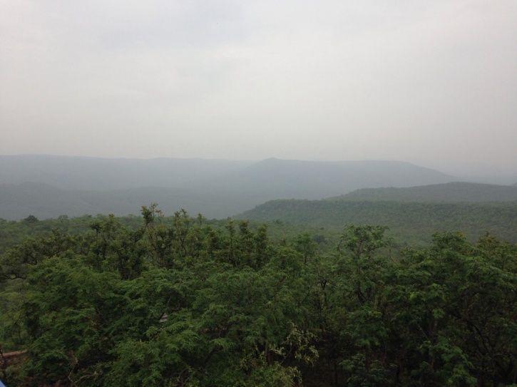 Nallamala Forest