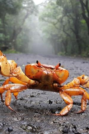 NCP Workers Release Crabs At Residence Of Minister Who Said Crabs Responsible For Dam Breach