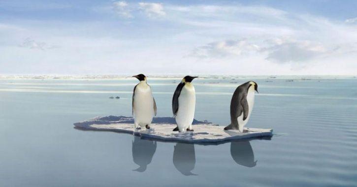 penguin endangered