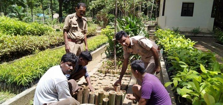 sapling in bamboo pots