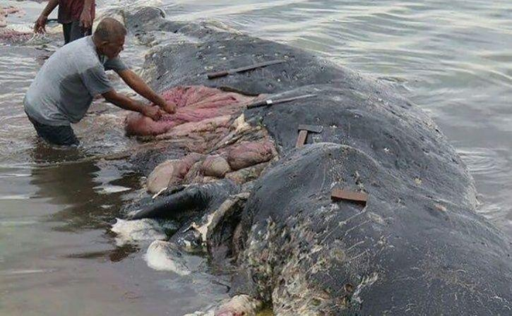 Dead Sperm Whale Found In Indonesia With 6 Kg Of Plastic In Its Stomach, We Should Be Ashamed novemb