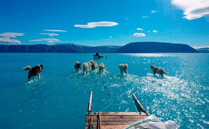 Dog make their way on sea