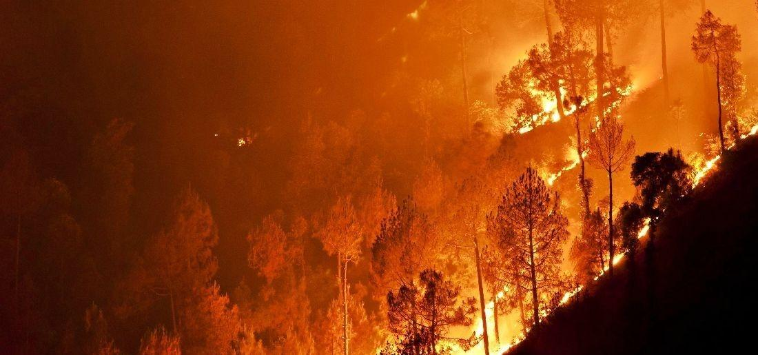 In 6 Months, 28,000 Incidents Of Forest Fires Across India Caused Great Loss To Ecosystem