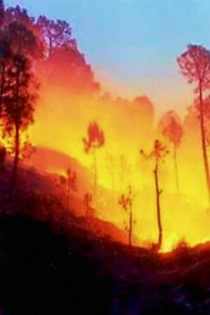 In 6 Months 28000 Incidents Of Forest Fires Across India Led To Great Loss To Fragile Ecosystem