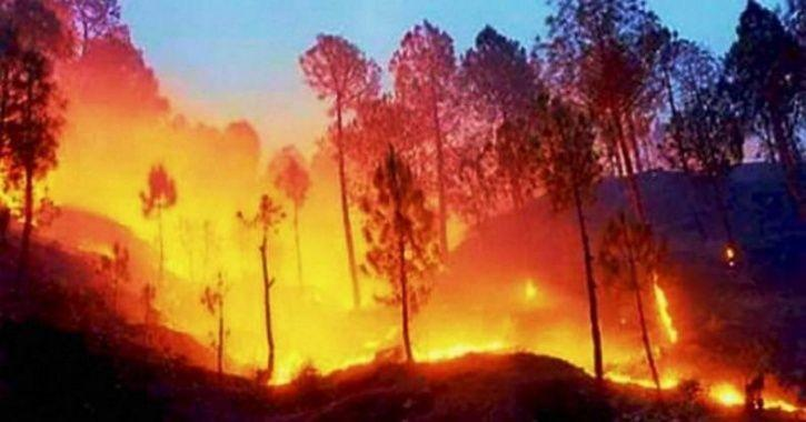 In 6 Months, 28,000 Incidents Of Forest Fires Across India Led To Great Loss To Fragile Ecosystem