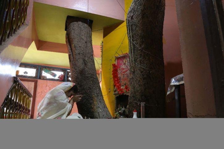novel tree house
