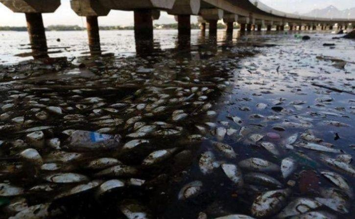 oil spills and waste, from factories as well as by human, the marine life has suffered
