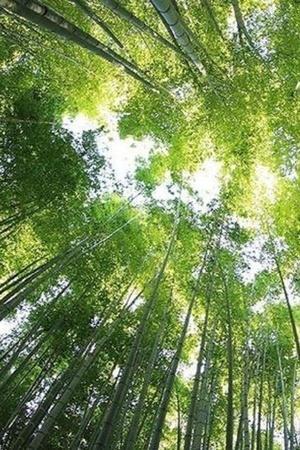 plant extinction