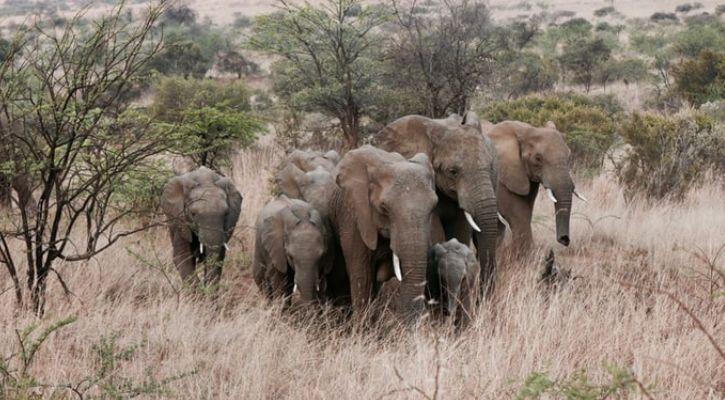 Zimbabwe elephants